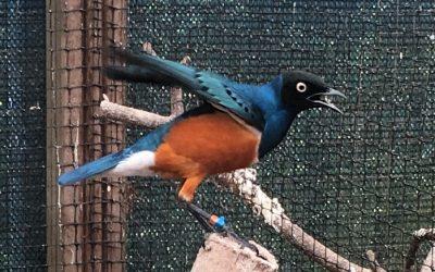 50+  Bezoekt de Vogelspeciaalzaak